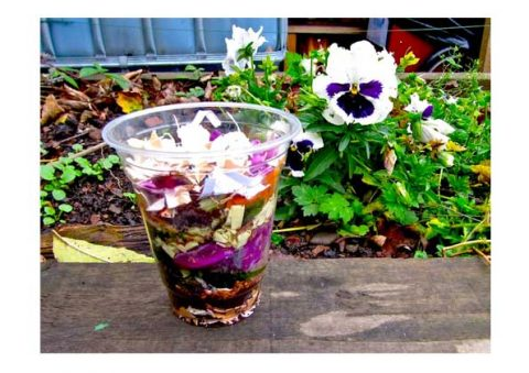 Example of a transparent compost cup