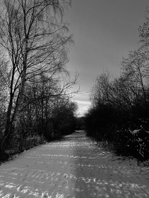 Morning Photo of snowy road through woodland by Niamh Ricci