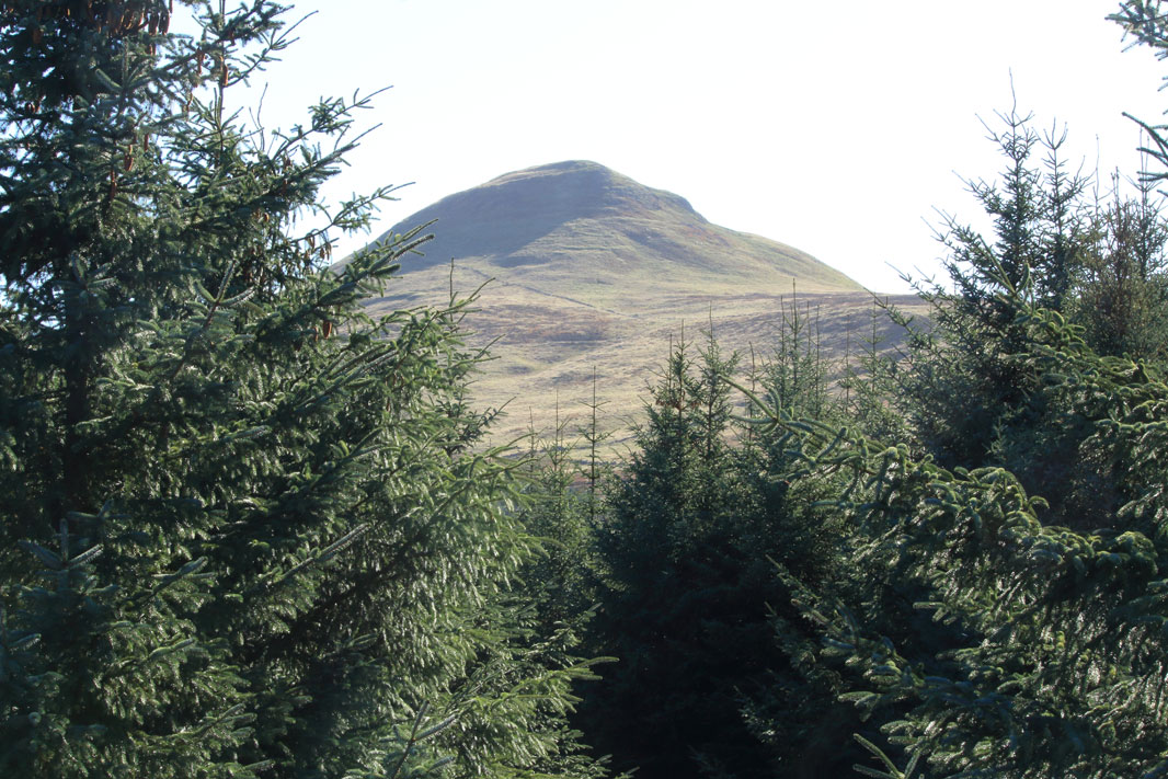 View of the East Lomonds from Falkland Estate