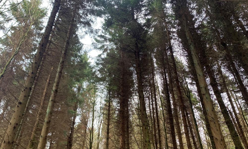 Trees at Falkland Estate